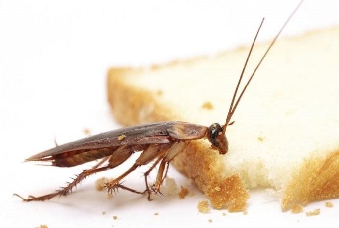 Обработка помещений от тараканов с гарантией во Владивостоке от ДЕЗ-Комфорт - фото